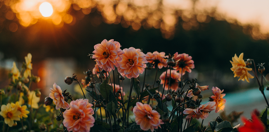 flowers in front of a sunset